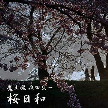 Cherry blossoms fullbloom