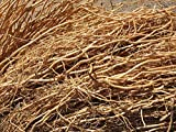 Scash Vetiver Root Chrysopogon zizanioides,Khus Khus,Natural Herb,Dry Root 50 Gram