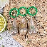 XIDAJIE 3Pcs Live Succulent Terrarium Necklace, Cactus Glass Pendant Wearable Plant Bottle Miniature Terrarium Plant Keychain Accessory