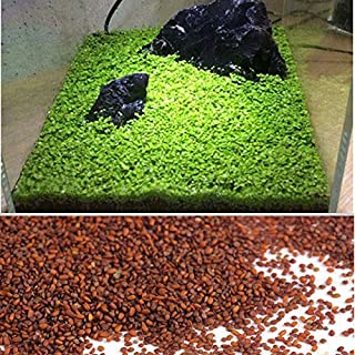 Aquarium Plants Seeds Aquatic Water Grass Seeds for Fish Tank Rock Lawn Garden Decor(1 Pack)