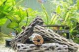 Aquatic Arts 4 Cholla Wood Pieces - Sinkable Aquarium...