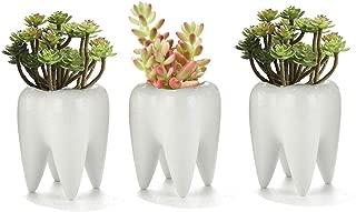 Teeth Pots White Ceramic Succulent Planter Pots/Mini Flower Plant Containers Cute Animal Shaped Cartoon Planter Pots Plant Creative Pen Pencil Holder for Desk Decor 3 Pack
