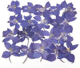 blue larkspur flower