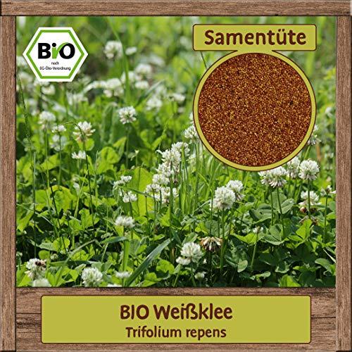 BIO Weißklee Samen Bodendecker Gründüngung Bienewiese Weiss-Klee Saatgut mehrjährig