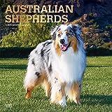 Australian Shepherds - Australische Schäferhunde 2020 - 16-Monatskalender mit freier DogDays-App: Original BrownTrout-Kalender [Mehrsprachig] [Kalender] (Wall-Kalender)