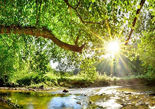 wandmotiv24 Fototapete Wald mit Fluss L 300 x 210 cm - 6 Teile Fototapeten, Wandbild, Motivtapeten, Vlies-Tapeten Baum, Sonne, Blätter M5757