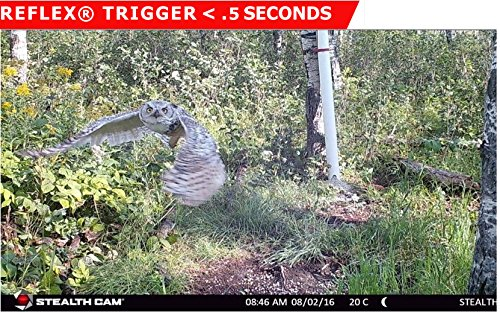 Stealth Cam G42NG No Glo Trail and Wildlife Camera
