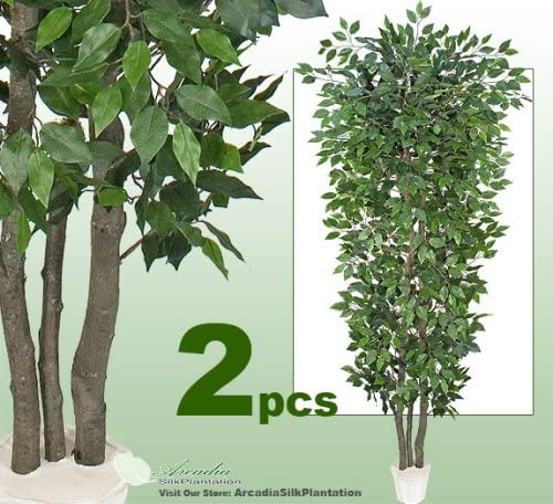 Arcadia Outlet sale feature Silk Plantation Two 8' Very Wood Real Trunks OFFer Ficus Full