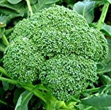 Broccoli Calabrese Sprouting...image