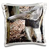 3dRose Anteater Nose Raised-Pillow Case, 16 by 16' (pc_215939_1)