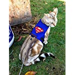 Cat Harness Mynwood Cat Jacket/Harness Superman Kitten up to 8month – Escape Proof