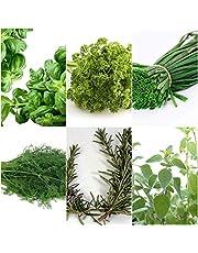 Keukenkruiden - 6 soorten - ca. 700 ++ zaden - apart verpakt -