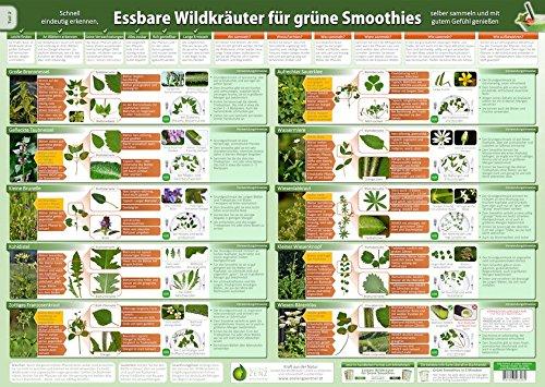 Essbare Wildkräuter für Grüne Smoothies Teil 2- Wandposter (DINA2) - (2020): Schnell eindeutig erkennen, selber sammeln und mit gutem Gefühl genießen ... selber sammeln und mit gutem Gefühl genießen)