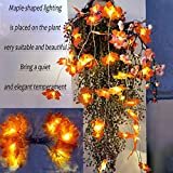 Herbst lichterkette, Ainkedin Herbst Blättergirlande,lichterkette,10 Ahornblatt Licht,Länge 1.5 Meter Benutzt für herbstdeko und weihnachtsdeko halloween deko party deko tischdeko - 4