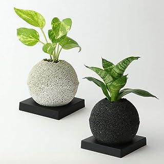 【eco-pochi NEO】葉サンセベリア × エコポチ・スフィアミニ(球型通常サイズ) 黒 竹炭やシラスを使った観葉植物用植木鉢
