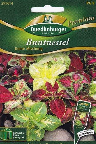 Buntnessel, Bunte Mischung