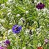 Bienenwiese Blumenmischung: 100g Premium Bienen Saatgut für bunte Bienenweide, Bienen und Hummelmagnet - bienenfreundliche Blumensamen Mischung ein- und mehrjährig - Blumenwiese Samen von OwnGrown #3