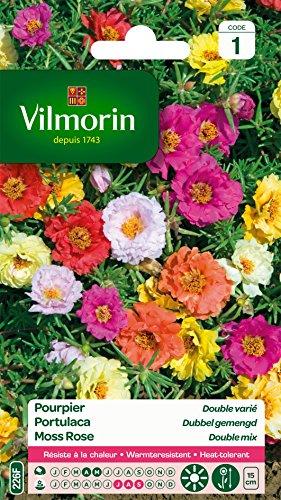 Vilmorin 5633441 Pourpier à grande fleur double varie, Multicolore, 90 x 2 x 160 cm