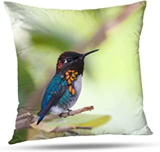 Tyfuty 18 x 18 Inch Throw Pillow Covers Bird World Bee Beautiful Blue Species Orange Red Pillowcases Cushion Use for Living Room Bed Sofa