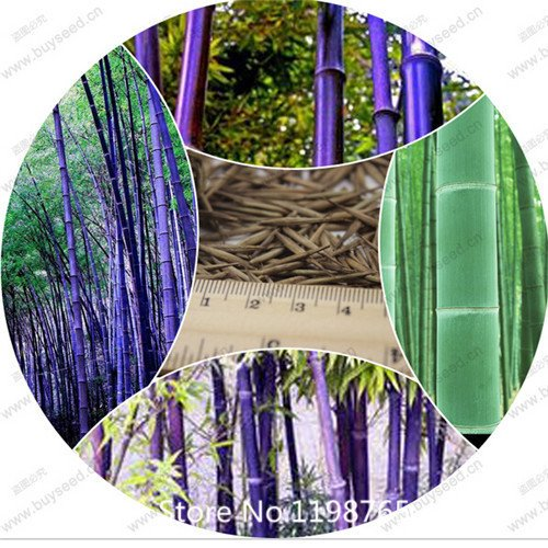 2016 Hot Free shipping 50 + frais géants graines de bambou Moso maison jardin Articles ménagers arbre bambou bricolage