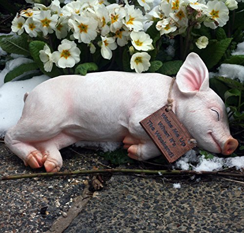 Paxton Pig Resin Garden Ornament'Wake Me Up When It Is The Weekend' …