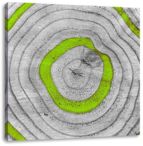 Green Tree ringenCanvas Foto Plein | Maat: 40x40 cm | Wanddecoraties | Kunstdruk | Volledig gemonteerd