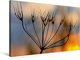Premium - Lienzo textil (75 cm x 50 cm, horizontal, diseño del amanecer en el diablo, imagen sobre bastidor, imagen sobre lienzo: corona de semillas (CALVENDO Natur);CALVENDO Natur