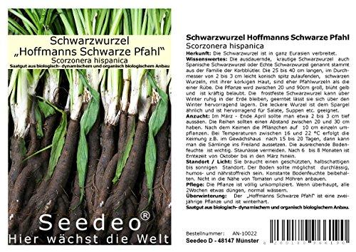 Seedeo® Schwarzwurzel Hoffmanns Schwarze Pfahl (Scorzonera hispanica) ca.100 Samen BIO