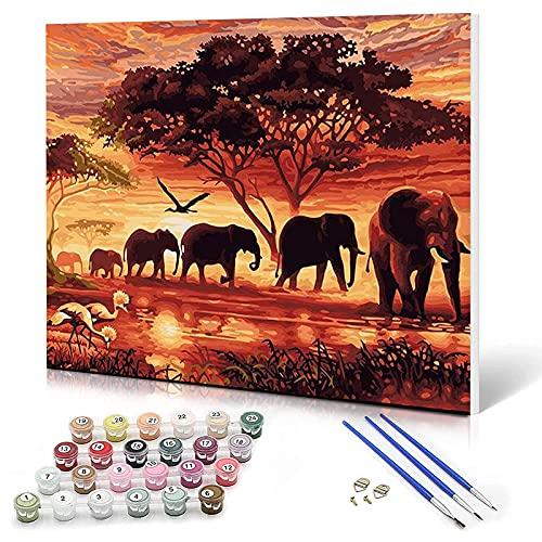XINRANFF Pintar por Números para Adultos, Pintura para Pintar por números con Pinceles y Colores Brillantes, Cuadro de Lienzo con numeros pre Dibujado fácil de Pintar