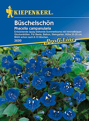 Prärieblume: Büschelschön, Phacelia campanularia - 1 Portion