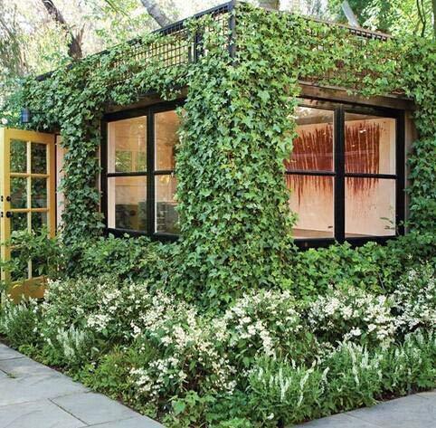 Shopmeeko Boston Ivy plantes 100pcs 2016 Livraison Gratuite Fleur bonsaï Parthenocissus Feuillage Fleur Plante Verte Maison Jardinage Grimper Un Mur: Vert