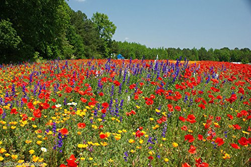 100g Meadow Wild Flower Seeds All Soil Types by pretty wild seeds 50/50 Mix 27