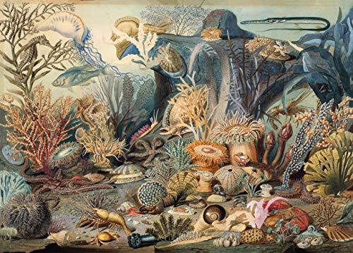 Puzzle Ocean Life