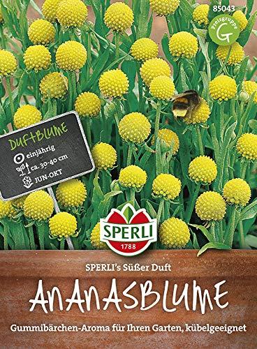 duftend-Samen Garten K20 Ananasblume 400x Cephalophora aromatica