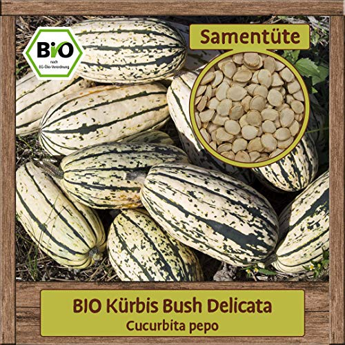 BIO Kürbis Samen Sorte Bush Delicata (Cucurbita pepo) Gemüsesamen Kürbis Saatgut