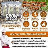 Paquet de 3 Morilles de culture extérieure Morel Dry Spores Morchella