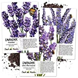Lavender Herb Seed Packet Collection (3 Varieties of Lavender) Open...