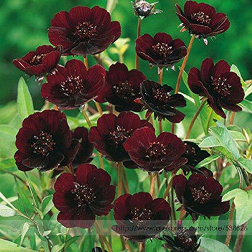 Promotion! 50seed / lot Seeds Crimson Phalaenopsis vivace plantes à fleurs d'orchidée en pot de fleur de Charme Seeds, # HRMGH8