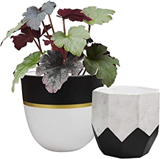 Best black and white pots for plants Reviews