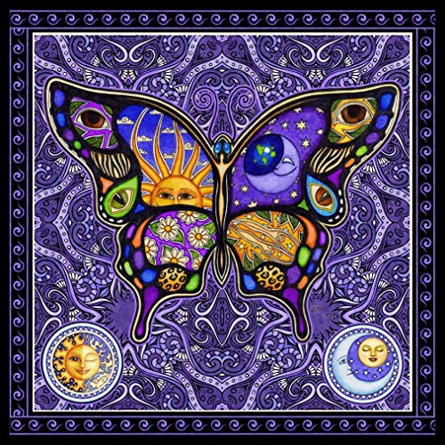 Dan Morris Night & Day Butterfly Square Signed Art Print
