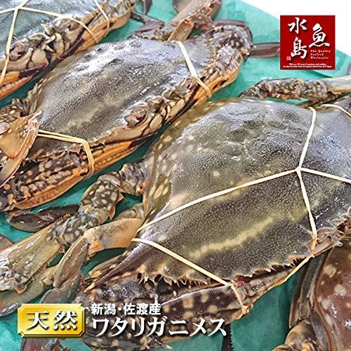 魚水島 新潟・佐渡産 天然 ワタリガニ 渡り蟹 メス 特大 5杯