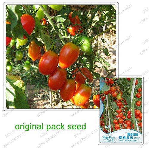 10 graines / Paquet, graines de tomates cerises, petite tomate, balcon plante en pot Fruits et légumes, graines de fruits