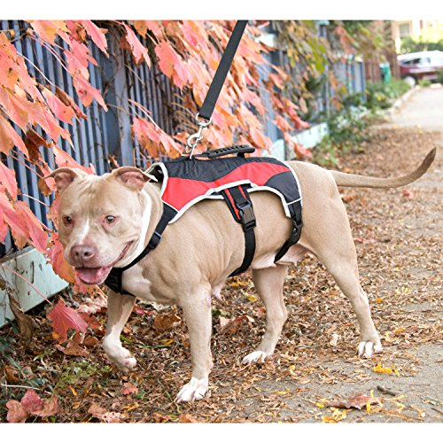 Peak Pooch Dog Walking Lifting Carry Harness, Support Mesh Padded Vest, Accessory, Collar, Lightweight, No More Pulling, Tugging or Choking, for Puppies, Small Dogs (Red, Medium)