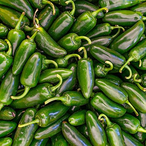 Chile Jalapeño Verde Fresco | 1kg | Mash Company