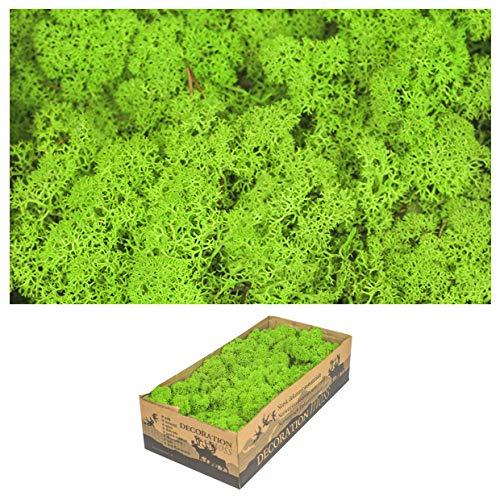 1 Kiste Echtes Moos - Natur Dekomoos zum basteln in verschiedenen frischen Sorten - DIY - Islandmoos, Plattenmoos, Bollenmoos, Hügelmoos Sphagnum Moos (1x Island Moos Gras Grün)