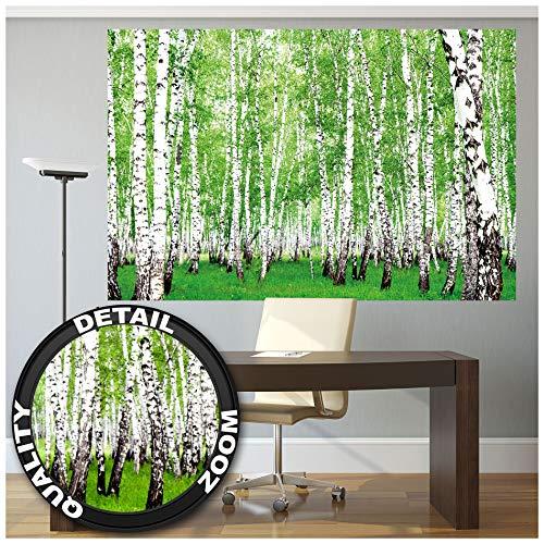 GREAT ART XXL Poster – Birkenwald – Wald Foto Naturdekoration Landschaft Wanddekoration Natur Waldweg Flora und Fauna Wandbild Deko Waldlichtung Motiv Fotoposter (140 x 100 cm)