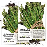Seed Needs, Mary Washington Asparagus (Asparagus officinalis) Twin...