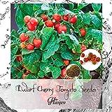Tomaton Seeds - Tiny Tim Tomato Seeds - Dwarf Cherry Tomato Seeds for...