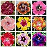 Flower Seeds200Pcs/Bag Hibiscus Coralline Seeds Rustic Sunshine Preferir floreciente vibrante Hibiscus Coralline Seeds para Bonsai - Hibiscus Coralline Seeds