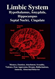 Best limbic system love Reviews